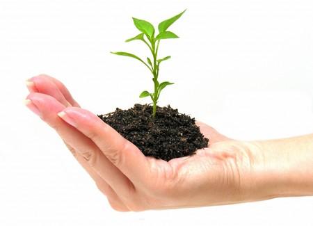 grow_more_trees